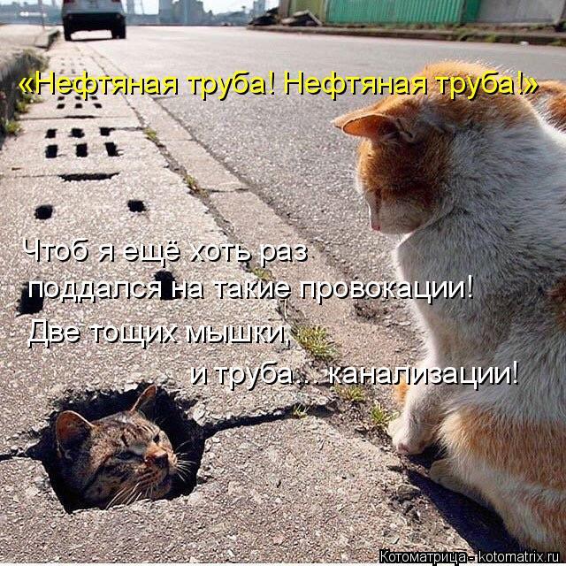 Котоматрица: «Нефтяная труба! Нефтяная труба!» Чтоб я ещё хоть раз  поддался на такие провокации! Две тощих мышки,  и труба... канализации!