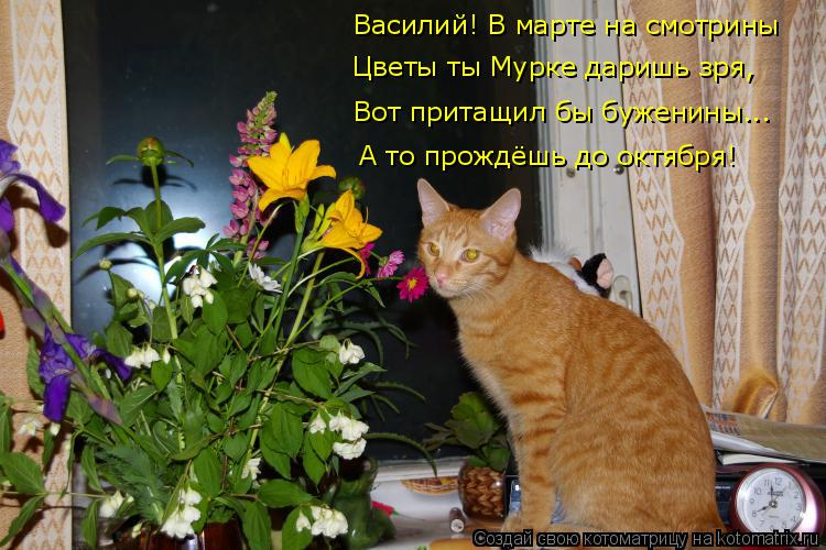 Котоматрица: Василий! В марте на смотрины Цветы ты Мурке даришь зря, Вот притащил бы буженины... А то прождёшь до октября!