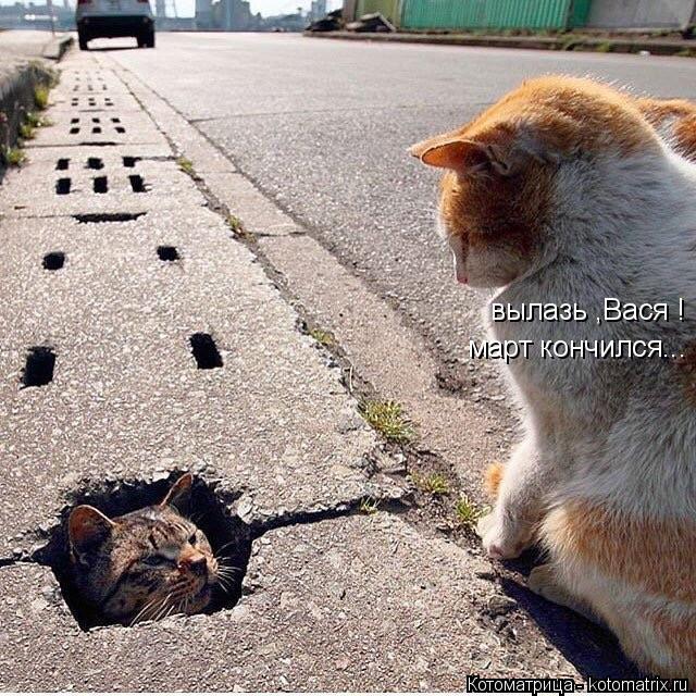 Котоматрица: вылазь ,Вася ! март кончился...