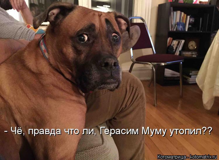 Котоматрица: - Чё, правда что ли, Герасим Муму утопил??