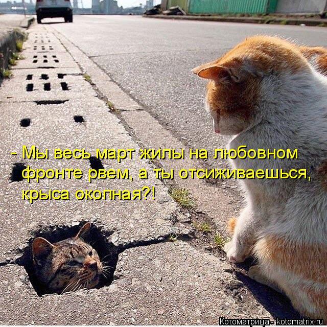 Котоматрица: - Мы весь март жилы на любовном  фронте рвем, а ты отсиживаешься, крыса окопная?!