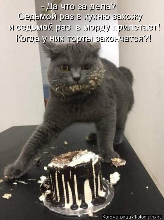 Котоматрица: - Да что за дела? Седьмой раз в кухню захожу  и седьмой раз  в морду прилетает! Когда у них торты закончатся?!