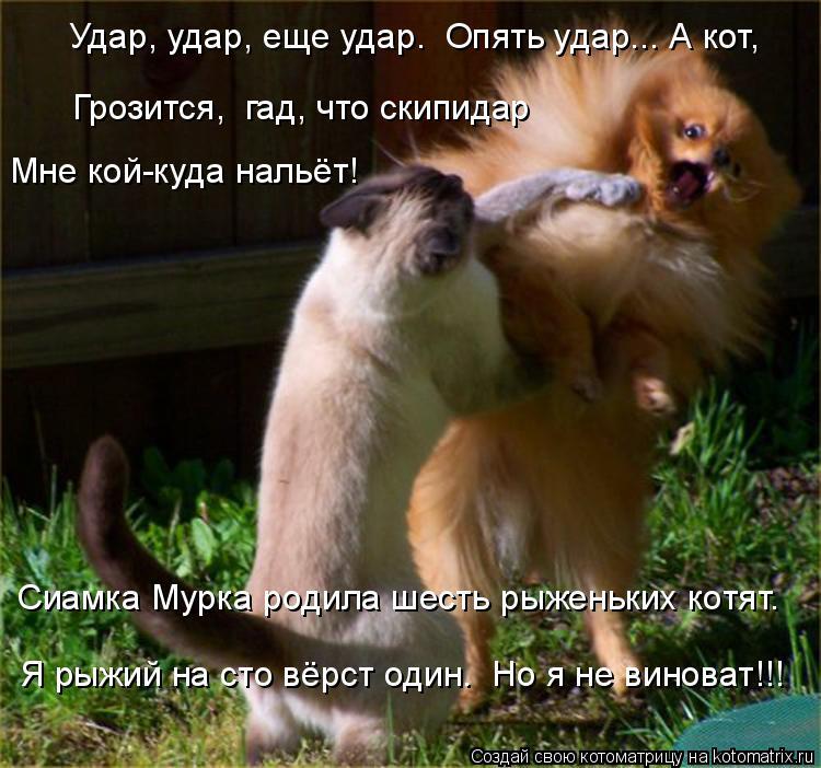 Котоматрица: Удар, удар, еще удар.  Опять удар... А кот,  Грозится,  гад, что скипидар Мне кой-куда нальёт! Сиамка Мурка родила шесть рыженьких котят. Я рыжий