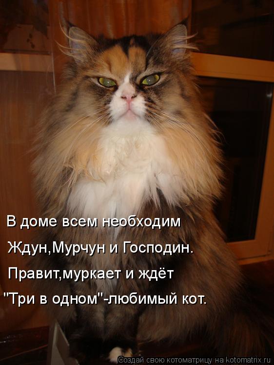 """Котоматрица: В доме всем необходим Ждун,Мурчун и Господин. Правит,муркает и ждёт """"Три в одном""""-любимый кот."""