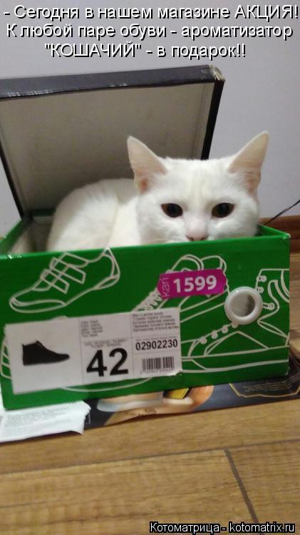 """Котоматрица: - Сегодня в нашем магазине АКЦИЯ!! К любой паре обуви - ароматизатор """"КОШАЧИЙ"""" - в подарок!!"""