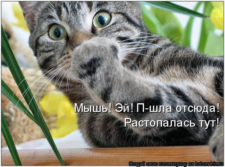 Котоматрица: Мышь! Эй! П-шла отсюда! Растопалась тут!