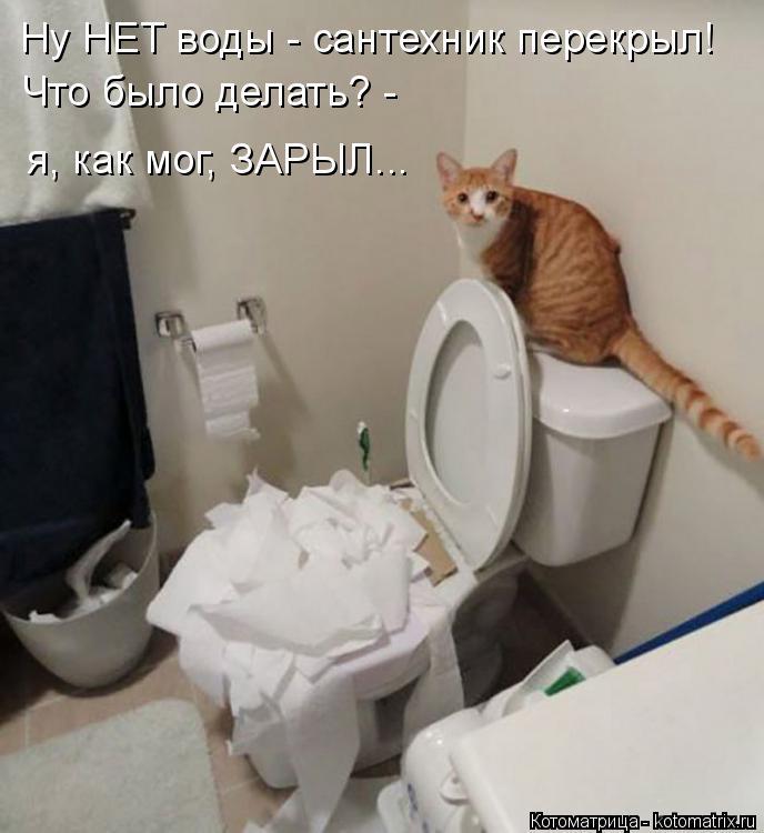 Котоматрица: Ну НЕТ воды - сантехник перекрыл! Что было делать? - я, как мог, ЗАРЫЛ...