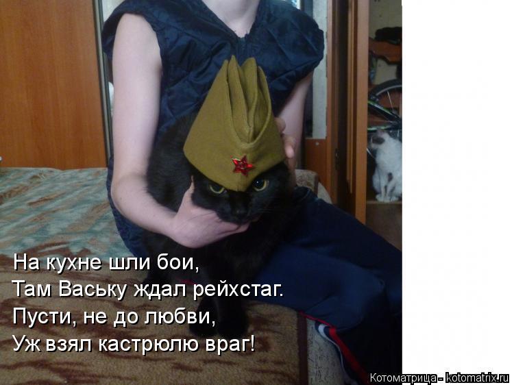 Котоматрица: На кухне шли бои, Там Ваську ждал рейхстаг. Пусти, не до любви, Уж взял кастрюлю враг!