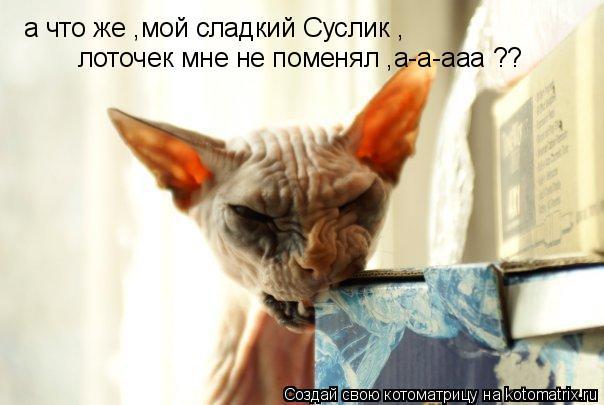 Котоматрица: а что же ,мой сладкий Суслик , лоточек мне не поменял ,а-а-ааа ??
