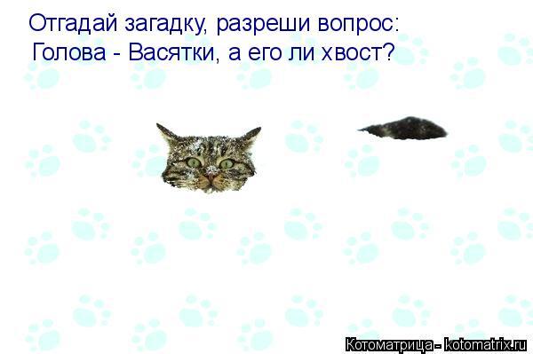 Котоматрица: Отгадай загадку, разреши вопрос: Голова - Васятки, а его ли хвост?