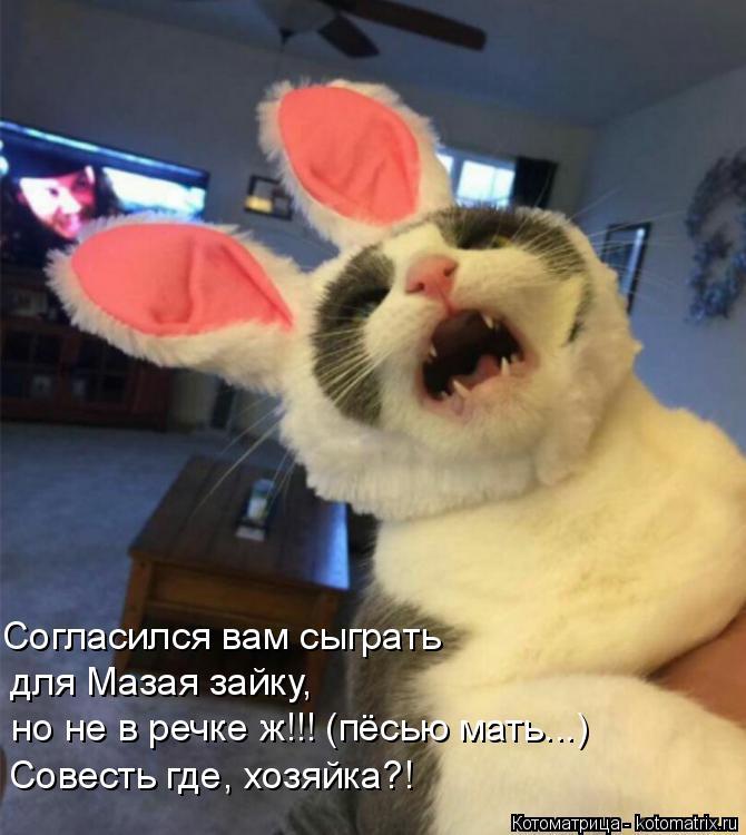 Котоматрица: Согласился вам сыграть для Мазая зайку, но не в речке ж!!! (пёсью мать...) Совесть где, хозяйка?!
