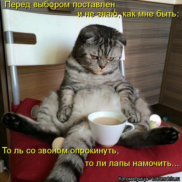 Котоматрица: Перед выбором поставлен  и не знаю, как мне быть: То ль со звоном опрокинуть, то ли лапы намочить...