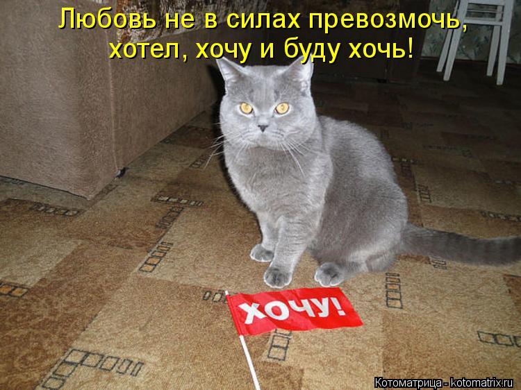 Котоматрица: Любовь не в силах превозмочь, хотел, хочу и буду хочь!