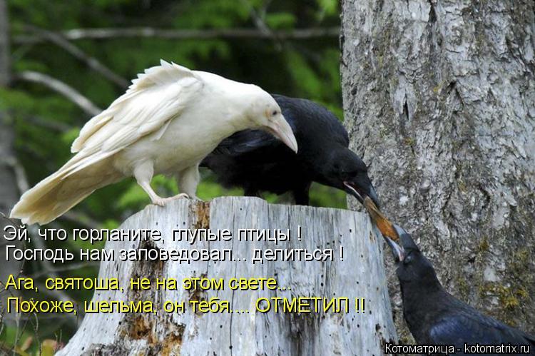 Котоматрица: Эй, что горланите, глупые птицы ! Господь нам заповедовал... делиться ! Ага, святоша, не на этом свете... Похоже, шельма, он тебя.... ОТМЕТИЛ !!