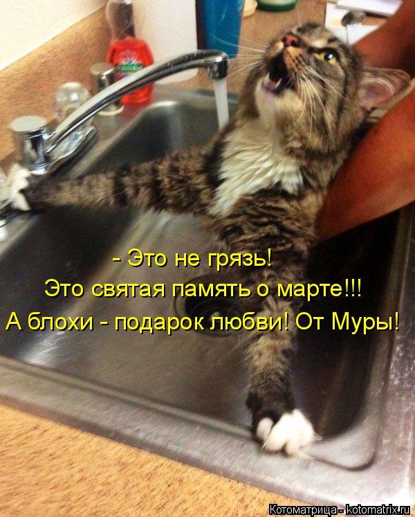 Котоматрица: - Это не грязь!  Это святая память о марте!!! А блохи - подарок любви! От Муры!