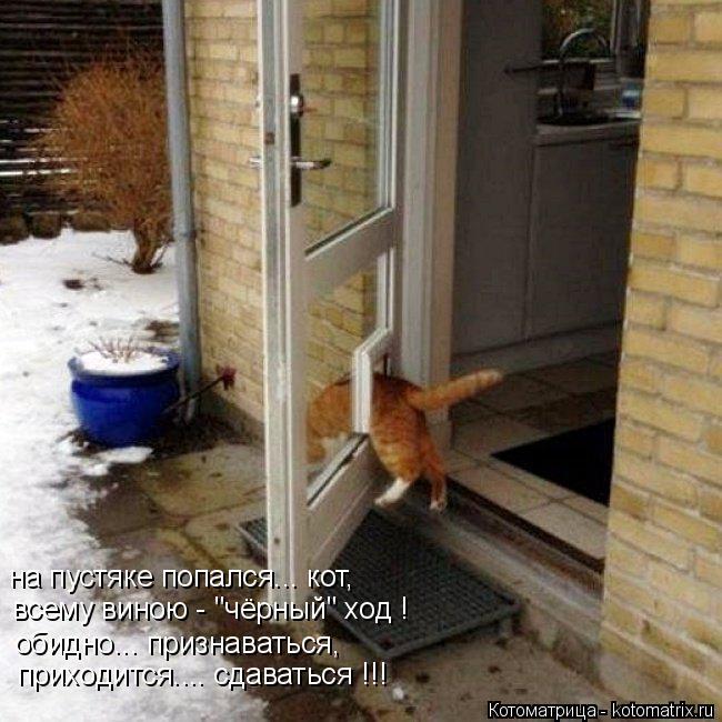 """Котоматрица: на пустяке попался... кот, всему виною - """"чёрный"""" ход ! обидно... признаваться, приходится.... сдаваться !!!"""