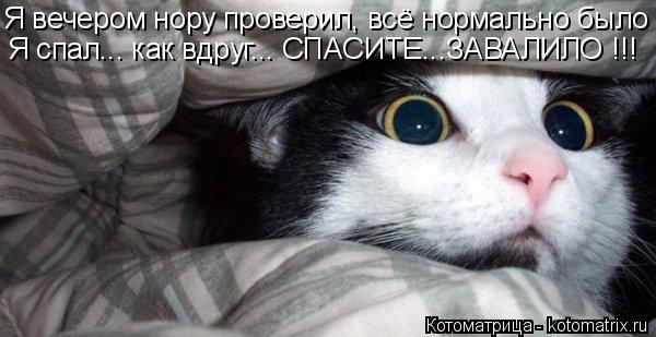 Котоматрица: Я спал... как вдруг... СПАСИТЕ...ЗАВАЛИЛО !!! Я вечером нору проверил, всё нормально было