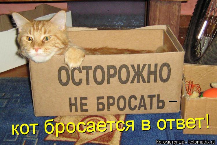 Котоматрица: - _ кот бросается в ответ!