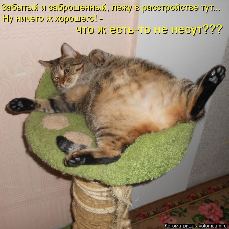 Котоматрица: Забытый и заброшенный, лежу в расстройстве тут... Ну ничего ж хорошего! - что ж есть-то не несут???