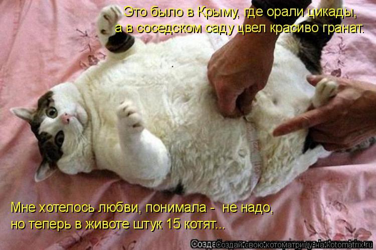 Котоматрица: Это было в Крыму, где орали цикады,  а в соседском саду цвел красиво гранат. Мне хотелось любви, понимала -  не надо,  но теперь в животе штук 15
