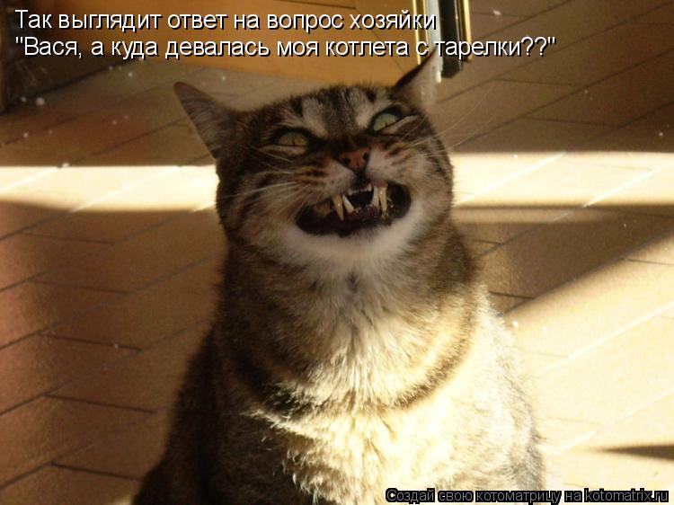 """Котоматрица: Так выглядит ответ на вопрос хозяйки """"Вася, а куда девалась моя котлета с тарелки??"""""""