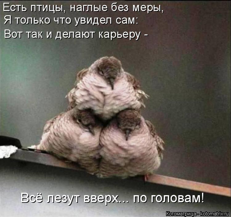 Котоматрица: Есть птицы, наглые без меры, Я только что увидел сам: Вот так и делают карьеру - Всё лезут вверх... по головам!