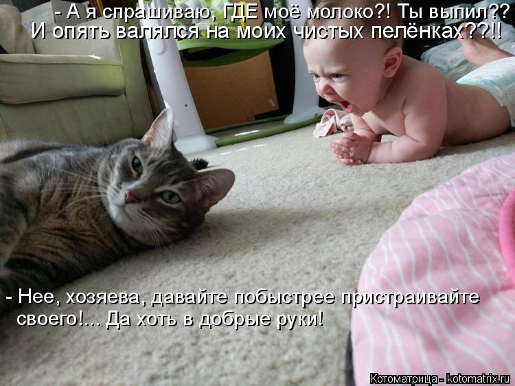 Котоматрица: - Нее, хозяева, давайте побыстрее пристраивайте своего!... Да хоть в добрые руки! - А я спрашиваю, ГДЕ моё молоко?! Ты выпил?? И опять валялся на м