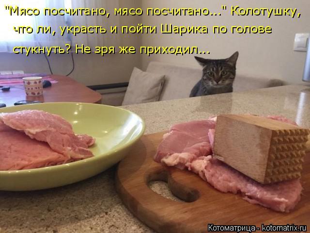 """Котоматрица: """"Мясо посчитано, мясо посчитано..."""" Колотушку,  что ли, украсть и пойти Шарика по голове  стукнуть? Не зря же приходил..."""