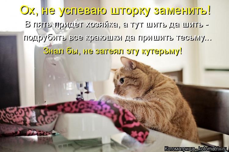 http://kotomatrix.ru/images/lolz/2017/05/17/kotomatritsa_4.jpg