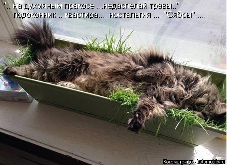 """Котоматрица: """".. на духмяным пракосе ...недаспелай травы.."""" подоконник... квартира.... ностальгия..... """"Сябры"""" ...."""