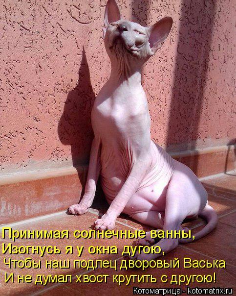 Котоматрица: Принимая солнечные ванны, Изогнусь я у окна дугою, Чтобы наш подлец дворовый Васька И не думал хвост крутить с другою!