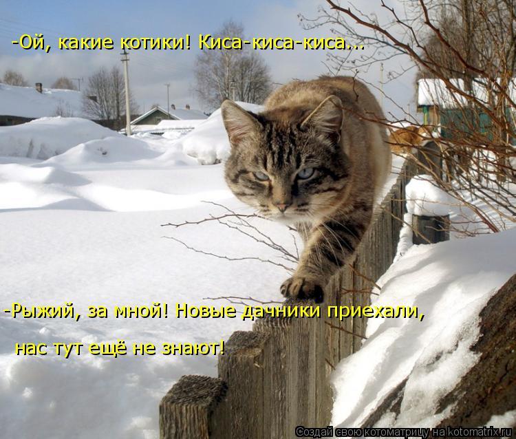 Котоматрица: -Рыжий, за мной! Новые дачники приехали, -Ой, какие котики! Киса-киса-киса... нас тут ещё не знают!