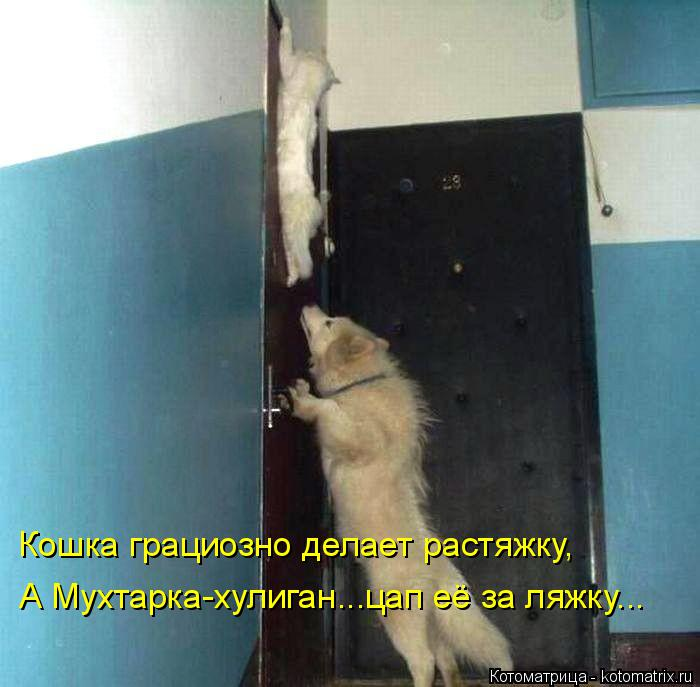 Котоматрица: Кошка грациозно делает растяжку, А Мухтарка-хулиган...цап её за ляжку...