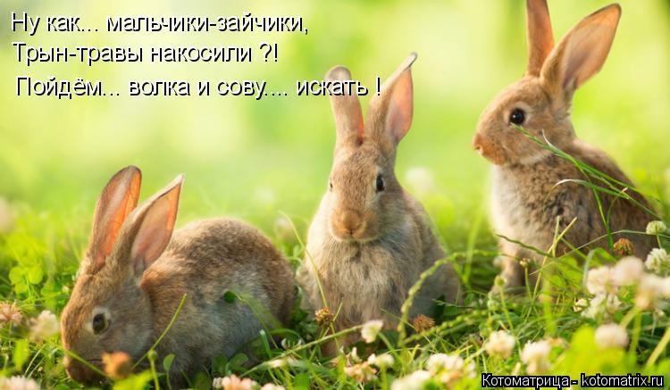 Котоматрица: Ну как... мальчики-зайчики, Трын-травы накосили ?! Пойдём... волка и сову.... искать !