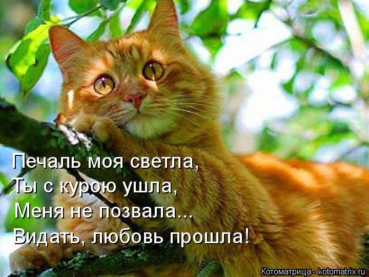 Котоматрица: Печаль моя светла, Ты с курою ушла, Меня не позвала... Видать, любовь прошла!