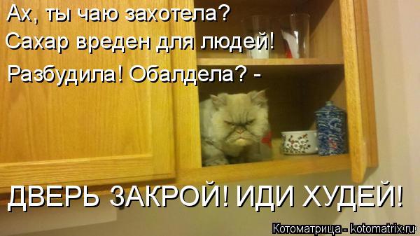 Котоматрица: Ах, ты чаю захотела?  Сахар вреден для людей! Разбудила! Обалдела? - ДВЕРЬ ЗАКРОЙ! ИДИ ХУДЕЙ!