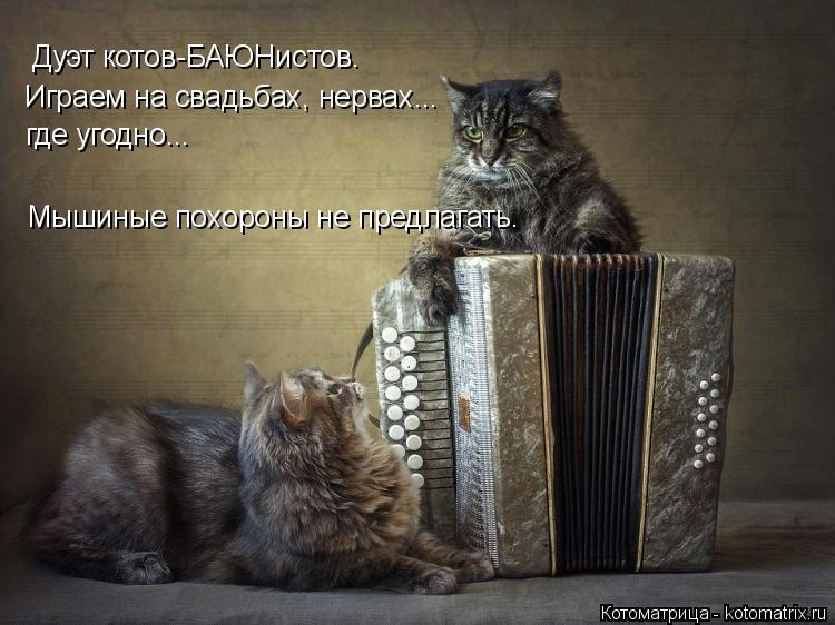 Котоматрица: Дуэт котов-БАЮНистов. Играем на свадьбах, нервах... где угодно... Мышиные похороны не предлагать.