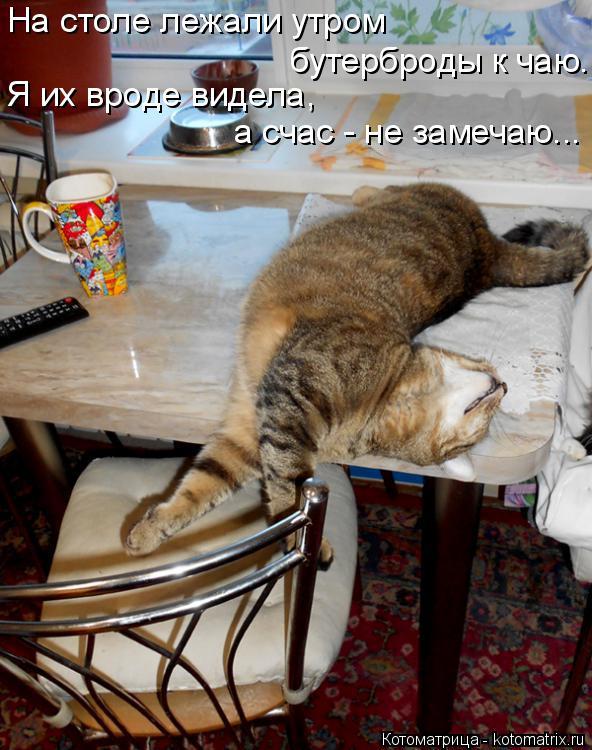 Котоматрица: На столе лежали утром бутерброды к чаю. Я их вроде видела, а счас - не замечаю...