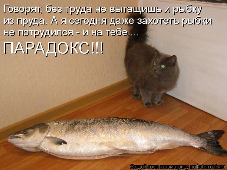 Котоматрица: Говорят, без труда не вытащишь и рыбку  из пруда. А я сегодня даже захотеть рыбки  не потрудился - и на тебе.... ПАРАДОКС!!!