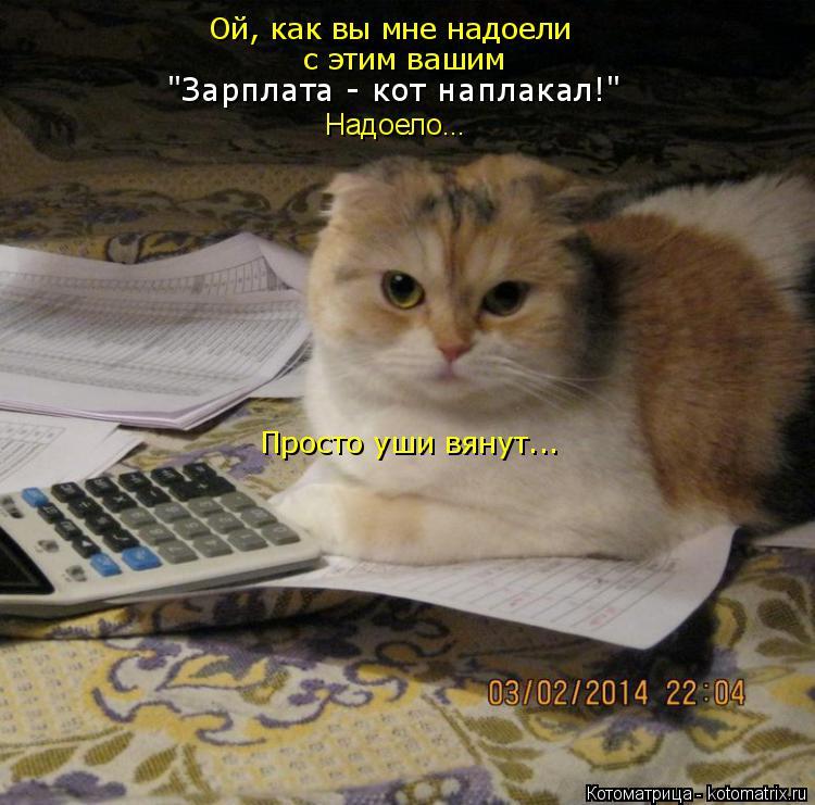 """Котоматрица: Ой, как вы мне надоели с этим вашим """"Зарплата - кот наплакал!"""" Просто уши вянут... Надоело..."""