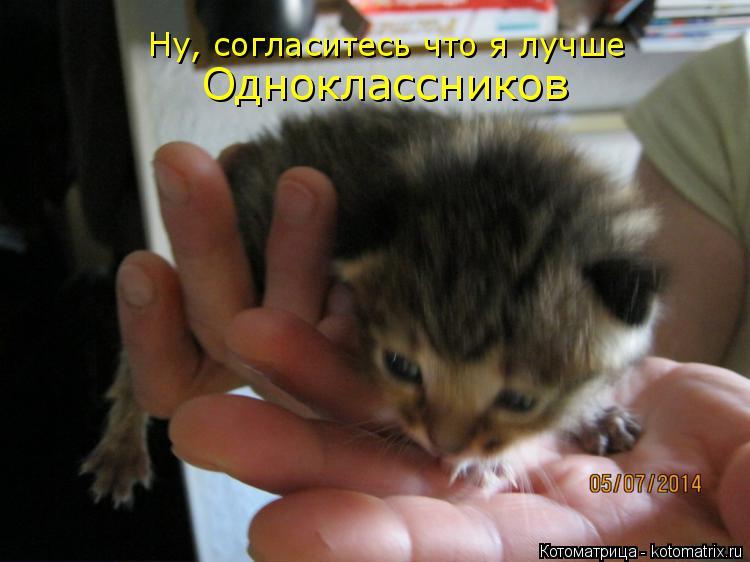 Котоматрица: Ну, согласитесь что я лучше Одноклассников