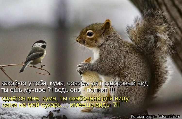 Котоматрица: какой-то у тебя, кума, совсем уж нездоровый вид, ты ешь мучное ?! ведь оно - полнит !!! сдаётся мне, кума, ты озабочена для виду, сама на мой сухар