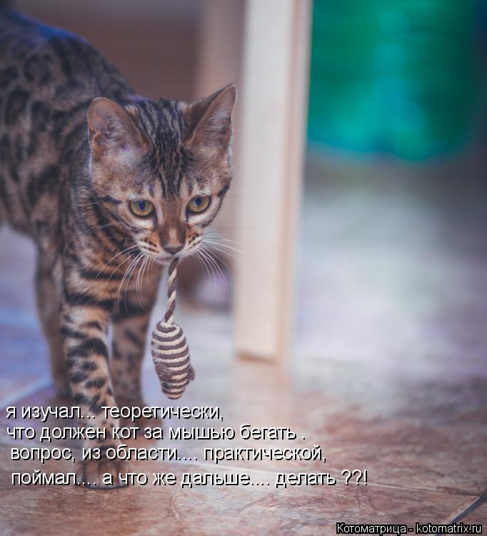 Котоматрица: я изучал... теоретически,  что должен кот за мышью бегать . вопрос, из области.... практической, поймал.... а что же дальше.... делать ??!