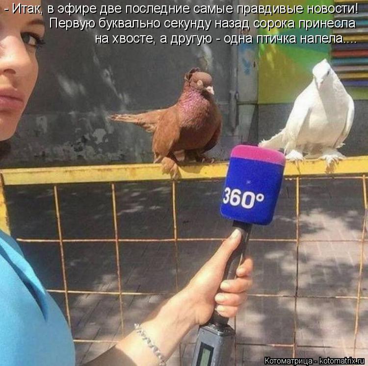 Котоматрица: Первую буквально секунду назад сорока принесла  на хвосте, а другую - одна птичка напела.... - Итак, в эфире две последние самые правдивые ново