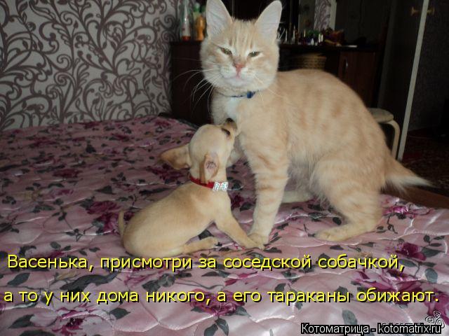 Котоматрица: Васенька, присмотри за соседской собачкой, а то у них дома никого, а его тараканы обижают.