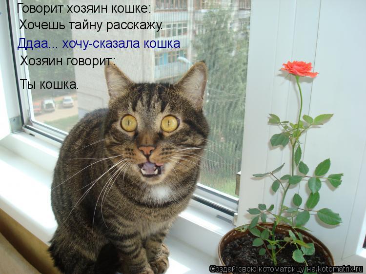 Что говорит кошка о хозяине