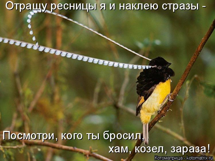 Котоматрица: Отращу ресницы я и наклею стразы - Посмотри, кого ты бросил,  хам, козел, зараза!