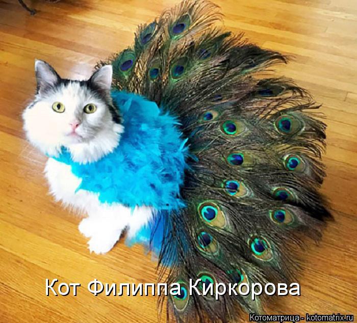 Котоматрица: Кот Филиппа Киркорова
