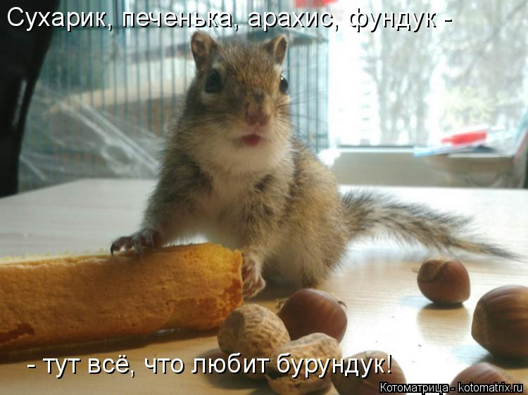 Котоматрица: Сухарик, печенька, арахис, фундук -  - тут всё, что любит бурундук!