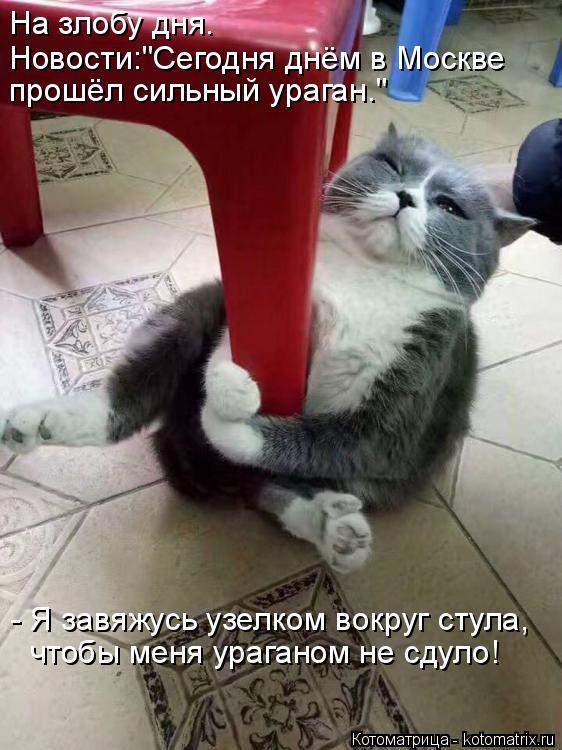 """Котоматрица: - Я завяжусь узелком вокруг стула, чтобы меня ураганом не сдуло! На злобу дня. Новости:""""Сегодня днём в Москве прошёл сильный ураган."""""""